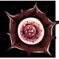 Huernia Frostia Flower