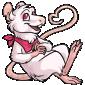 White Ratbe