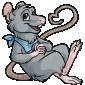 Grey Ratbe